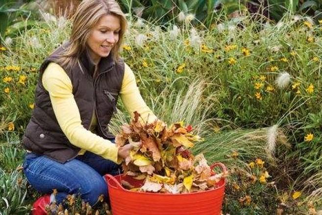 Que reste-t-il à faire au jardin en novembre ?   Habitos.be